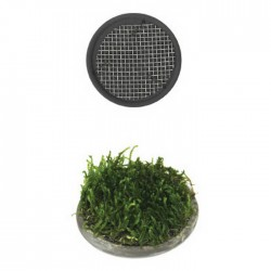 ista - Ista Bitki Izgarası 5 cm Yuvarlak
