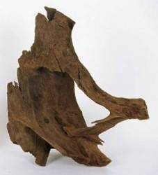özelyem - Mangrow Kökü Orta Boy 20-36 cm
