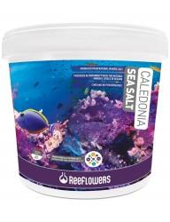 ReeFlowers - Reeflowers Caledonia Sea Salt 22.5 KG