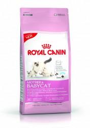 Royal Canin - Royal Canin Fhn Babycat 34 Yavru Kedi Maması 400 Gr
