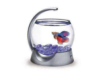 Tetra Betta Bowl Led Lambalı Beta Kabı