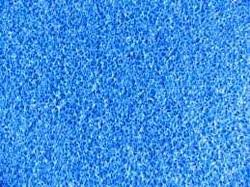 özelyem - Mavi İnce Gözenekli Biyolojik Sünger 60x45x5 cm